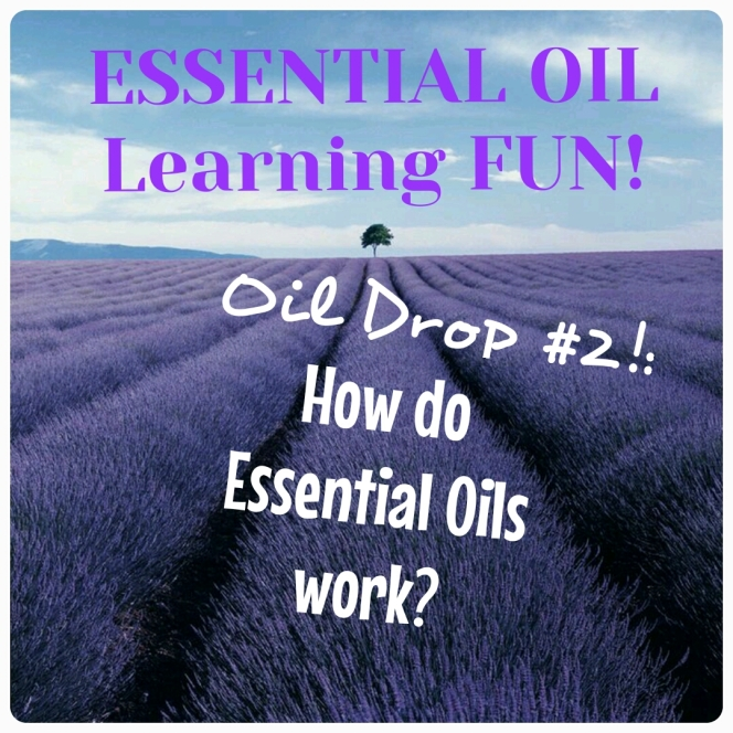 Oil Drop 2:  How do essential oils work?